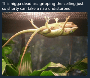 Ass, Dank, and Memes: This nigga dead ass gripping the ceiling just  so shorty can take a nap undisturbed  KuvatoN.com When I say 'not all men' I mean this one lizard, specifically by NoblePancake FOLLOW HERE 4 MORE MEMES.