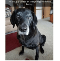 Birthday, Memes, and Happy Birthday: This old guy turned 14 today! Happy birthday  buddy A few animal snaps to make you smile | @cuteandfuzzybunch