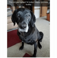 There's nothing better than an old dog: This old guy turned 14 today! Happy birthday  buddy There's nothing better than an old dog