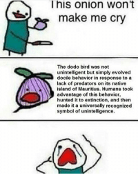 Onion, Black Twitter, and Predators: This onion Wont  make me cry  The dodo bird was not  unintelligent but simply evolved  docile behavior in response to a  lack of predators on its native  island of Mauritius. Humans took  advantage of this behavior,  hunted it to extinction, and then  made it a universally recognized  symbol of unintelligence. hnngndhdhs