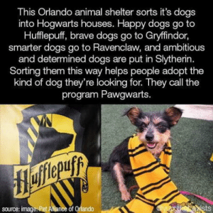 They should be called Huffleruff and Ravenpaw and idk what the others should be called, any suggestions?: This Orlando animal shelter sorts it's dogs  into Hogwarts houses. Happy dogs go to  Hufflepuff, brave dogs go to Gryffindor,  smarter dogs go to Ravenclaw, and ambitious  and determined dogs are put in Slytherin.  Sorting them this way helps people adopt the  kind of dog they're looking for. They call the  program Pawgwarts.  Hofitepuf  source: image. Pet Allance of Orlando  ists They should be called Huffleruff and Ravenpaw and idk what the others should be called, any suggestions?