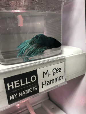 This pet store names all of the fish they have for sale: This pet store names all of the fish they have for sale
