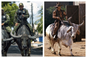This photo of Brazilian soldiers patrolling the streets on water buffaloes reminded me of my favorite character in Blazing Saddles: This photo of Brazilian soldiers patrolling the streets on water buffaloes reminded me of my favorite character in Blazing Saddles