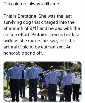 The good boi that helped during 9/11: This picture always kills me.  This is Bretagne. She was the last  surviving dog that charged into the  aftermath of 9/11 and helped with the  rescue effort. Pictured here is her last  walk as she makes her way into the  animal clinic to be euthanized. An  honorable send off. The good boi that helped during 9/11
