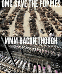 This picture demonstrates why eating animals, specifically pigs, is a social justice violation because there's a double-standard which is overlooked every time this occurs. Humans as a species have developed this affinity for certain animals but have forgotten that all animals are individuals. S.R.: This picture demonstrates why eating animals, specifically pigs, is a social justice violation because there's a double-standard which is overlooked every time this occurs. Humans as a species have developed this affinity for certain animals but have forgotten that all animals are individuals. S.R.