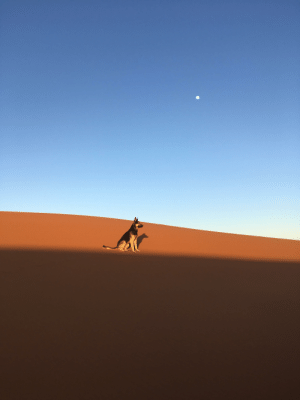 Dog, Edge, and The Edge: This picture of a dog I took. Sitting right on the edge of shadow (Sahara Desert).