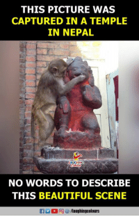 Beautiful, Nepal, and Indianpeoplefacebook: THIS PICTURE WAS  CAPTURED IN A TEMPLE  IN NEPAL  ING  NO WORDS TO DESCRIBE  THIS BEAUTIFUL SCENE #HanumanJayanti :)