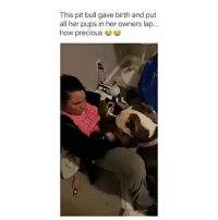 Memes, 🤖, and Pit Bull: This pit bull gave birth and put  all her pups in her owners lap...  how precious This is so sweet, love it♥️ Tag a friend Follow us @laugh.r.us