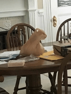 Faces-In-Things, Cat, and Plastic: This plastic bag looks exactly like a cat https://t.co/wG8Bnfbzv5