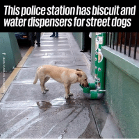 Dank, Dogs, and Water: This policestationhas biscuit and  water dispensers forstreet dogS We need these everywhere 👏👏
