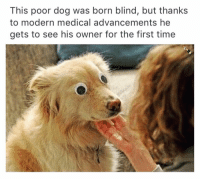 Wow this is so amazing. With all these edgy memes going around it sure is nice to sit back and read a heart warming thing like this ☺️: This poor dog was born blind, but thanks  to modern medical advancements he  gets to see his owner for the first time Wow this is so amazing. With all these edgy memes going around it sure is nice to sit back and read a heart warming thing like this ☺️