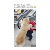 Your third emoji is your reaction😍: this poor doggo was too  scared to ride the escalator Your third emoji is your reaction😍