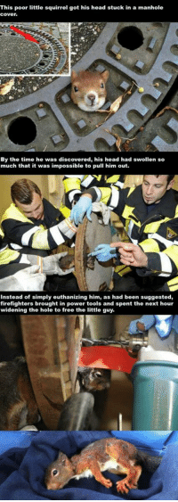 http://t.co/j6pVPjZwUo: This poor little squirrel got his head stuck in a manhole  Cover.  By the time he was discovered, his head had swollen so  much that it was impossible to pull him out.  Instead of simply euthanizing him, as had been suggested,  firefighters brought in power tools and spent the next hour  widening the hole to free the little guy. http://t.co/j6pVPjZwUo