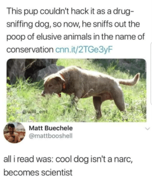 Animals, cnn.com, and Poop: This pup couldn't hack it as a drug  sniffing dog, so now, he sniffs out the  poop of elusive animals in the name of  conservation cnn.it/2TGe3yF  willlent  Matt Buechele  @mattbooshell  all i read was: cool dog isn't a narc,  becomes scientist Such a good boy