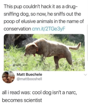 Animals, cnn.com, and Dank: This pup couldn't hack it as a drug-  sniffing dog, so now, he sniffs out the  poop of elusive animals in the name of  conservation cnn.it/2TGe3yF  Matt Buechele  @mattbooshell  all i read was: cool dog isn't a narc,  becomes scientist me_irl by connortheninja7 MORE MEMES