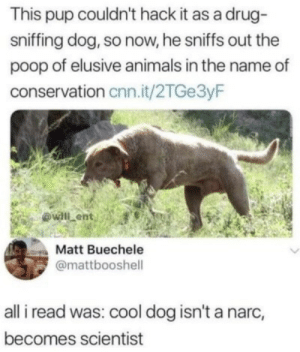 Animals, cnn.com, and Poop: This pup couldn't hack it as a drug  sniffing dog, so now, he sniffs out the  poop of elusive animals in the name of  conservation cnn.it/2TGe3yF  ovall ent  Matt Buechele  @mattbooshell  all i read was: cool dog isn't a narc,  becomes scientist