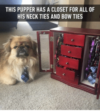 Memes, John Goodman, and 🤖: THIS PUPPER HAS A CLOSET FOR ALL OF  HIS NECK TIES AND B0W TIES Looks like a dapper John Goodman - - 📷@kyo_face