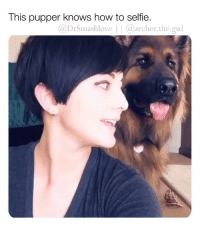 Bless Up, Memes, and Selfie: This pupper knows how to selfie.  @DrSmashlove | @archer.the.gsd THIS VIDEO IS SWEET GOODNESS BLESS UP 😍😂❤️ (@archer.the.gsd)