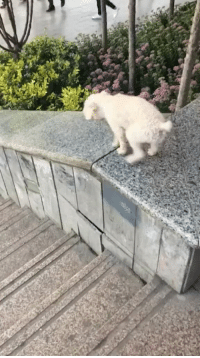 Cool, Puppy, and Pup: This puppy found a cool new activity