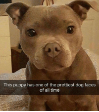 Dog Faces: This puppy has one of the prettiest dog faces  of all time