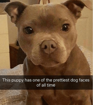 😍 😍 😭: This puppy has one of the prettiest dog faces  of all time 😍 😍 😭