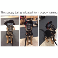 """Memes, Puppies, and Puppy: This puppy just graduated from puppy training  Ove Humans to other humans: """"You missed four questions on this exam with 7,000 multiple choice questions. Sorry but you must repeat it to obtain your degree."""" Humans to dogs: """"You didn't pee inside! You graduated, Fluffy! Here goes a degree - good boy 😍."""" I'm the wrong species bruh 😫😂😂😂"""