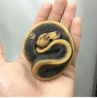 This python has a smiley face on him https://t.co/s0RiLTpkMf: This python has a smiley face on him https://t.co/s0RiLTpkMf