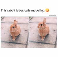 "Bruh, Coachella, and Friends: This rabbit is basically modelling  Drsmashlove (@dizzle_saint_james) Say Bruh why this bunny look like Megan, 22, best friends Abby, Teresa and Amanda all pronounce it ""Mee-ginn"", has been ready for Coachella for six months now, first day outfit will be a beige bikini top with destroyed jean shorts, aviator sunglasses, brown moccasins with beading detail, and a silver feather loosely Native American themed necklace, had 689 followers in IG, is hoping that by the end of 'Chella she'll have at least 850 GoHeadMegan MakeSomeMemoriesHappenMama BeCarefulAboutDoingMollyAndCokeTogetherTho ItAlwaysSeemsLikeAGoodIdea TillYouInTheBackOfTheAmmalamce 😂😂😂"