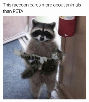 Animals, Funny, and True: This raccoon cares more about animals  than PETA True