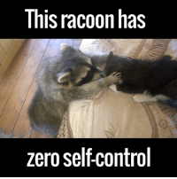 """Dank, 🤖, and Cat: This racoon has  zero selfcontrol """"Gimme dat cat"""" - Racoon, almost certainly.  via ViralHog"""
