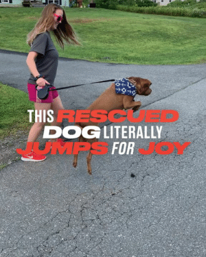 Tatum was rescued on his 'day to die'. Now he literally jumps for joy. 🐕👏: THIS RESC  DOGLITERALLY  JMPS FOR Tatum was rescued on his 'day to die'. Now he literally jumps for joy. 🐕👏