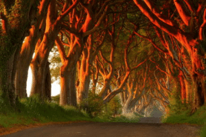 Lord of the Rings, Lord, and Rings: This road is straight out of lord of the rings