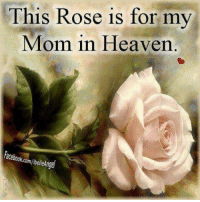 Happy Birthday Nanny 🌹💔: This Rose is for my  Mom in Heaven  acebook.c Happy Birthday Nanny 🌹💔