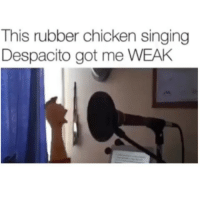 This is so lit😂💀: This rubber chicken singing  Despacito got me WEAH This is so lit😂💀