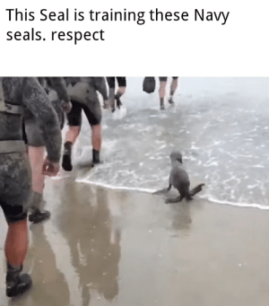 Move those flippers: This Seal is training these Navy  seals. respect Move those flippers