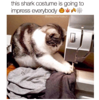 Memes, 🤖, and Impressive: this shark costume is going to  impress everybody  asleep nth