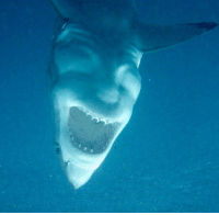 Head, Shark, and Satan: This shark looks like the head of Satan https://t.co/fSj0rFRElQ