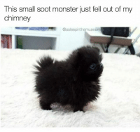 Idk what to do. Run away or pet it 😐 Follow @asleepinthemuseum 👈 right now: This small soot monster just fell out of my  chimney  @asleepinthemuseum Idk what to do. Run away or pet it 😐 Follow @asleepinthemuseum 👈 right now