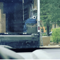 This stack of towels and rolls looks like Cookie Monster https://t.co/31EkdMcUuN: This stack of towels and rolls looks like Cookie Monster https://t.co/31EkdMcUuN