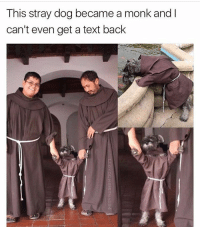 I see no correlation between these two events but I am very very proud of him: This stray dog became a monk and l  can't even get a text back I see no correlation between these two events but I am very very proud of him
