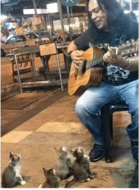 This street singer gave a concert to these cute kittens: This street singer gave a concert to these cute kittens