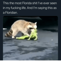 Fucking, Life, and Memes: This the most Florida shit I've ever seen  in my fucking life. And I'm saying this as  a Floridian. The raccoon dragged that nigga away at the end 💀💀💀💀💀