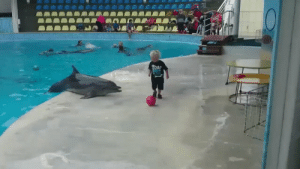 Funny, Best, and Dolphin: This toddler playing catch with a dolphin is the best thing I've seen today https://t.co/z9U2ccvpJF
