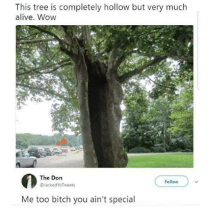 Alive, Bitch, and Wow: This tree is completely hollow but very much  alive. Wow  The Don  @JackedYo Tweets  Follow  Me too bitch you ain't special