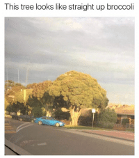 Funny, Meme, and Tree: This tree looks like straight up broccoli If you're not following @memezar, you're missing out on one of life's greatest gifts!
