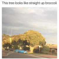Gym, Link, and Nature: This tree looks like straight up broccoli Nature is amazing 😂🙌 . @DOYOUEVEN 👈🏼 10% OFF STOREWIDE (use code DYE10 ✔️ tap the link in our BIO 🎉