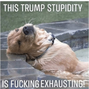 Fucking, Memes, and Trump: THIS  TRUMP STUPIDITY  IS FUCKING EXHAUSTING This dog is all of us! 😂  Follow Occupy Democrats for more!