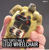 This little guy couldn't support the weight of his shell, so one genius vet made life easier for him. Amazing! 🙌🐢  via Ruptly: THIS TURTLE HAS A  LEGO WHEELCHAIR  UNILAD This little guy couldn't support the weight of his shell, so one genius vet made life easier for him. Amazing! 🙌🐢  via Ruptly