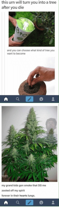 This makes me feel better about dying https://t.co/WH6dUwtl6L: this urn will turn you into a tree  after you die  and you can choose what kind of tree you  want to become   om  my grand kids gon smoke that OG me  zooted off my spirit  forever in their hearts lungs. This makes me feel better about dying https://t.co/WH6dUwtl6L