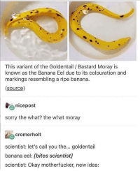 This little fucker via /r/memes https://ift.tt/2roJA8A: This variant of the Goldentail Bastard Moray is  known as the Banana Eel due to its colouration and  markings resembling a ripe banana.  (source)  nicepost  sorry the what? the what moray  cromerholt  scientist: let's call you the... goldentail  banana eel: [bites scientist]  scientist: Okay motherfucker, new idea: This little fucker via /r/memes https://ift.tt/2roJA8A